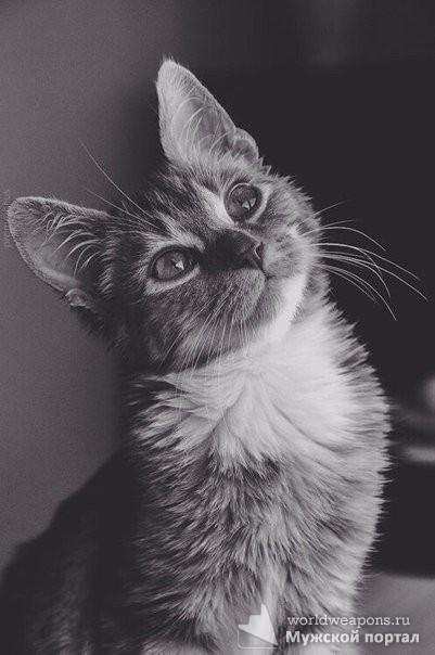 Кошка никогда не подружится с тем, кто не способен полюбить ее. Кошки никогда не ошибаются в людях.