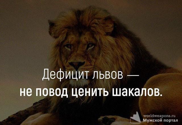 Дефицит львов - не повод ценить шакалов.