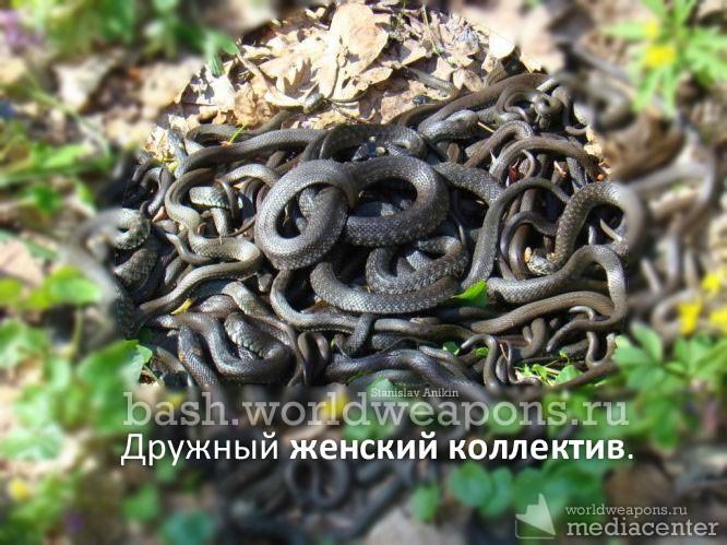 Нельзя ходить в лес змеиные свадьбы